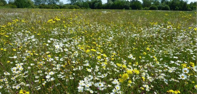 Wildlife Trust for Birmingham and the Black Country.JPG