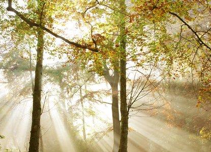 Woodland Trust - sunlight through trees